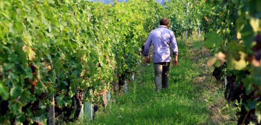 Riconoscimenti a vini di Azienda Agricola Ivaldi