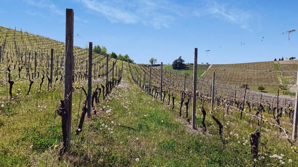 vigne con soffioni